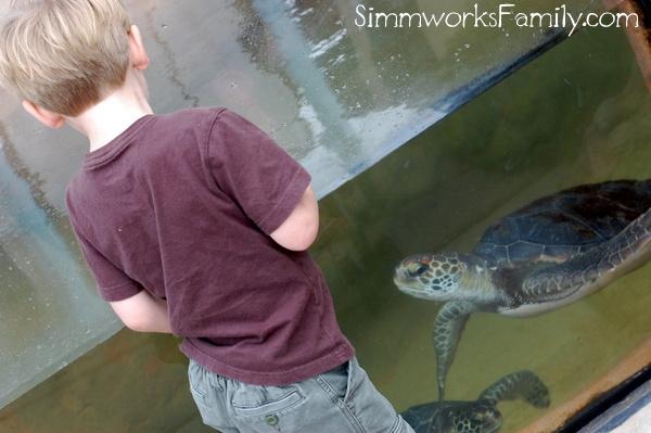 Talking to Turtles
