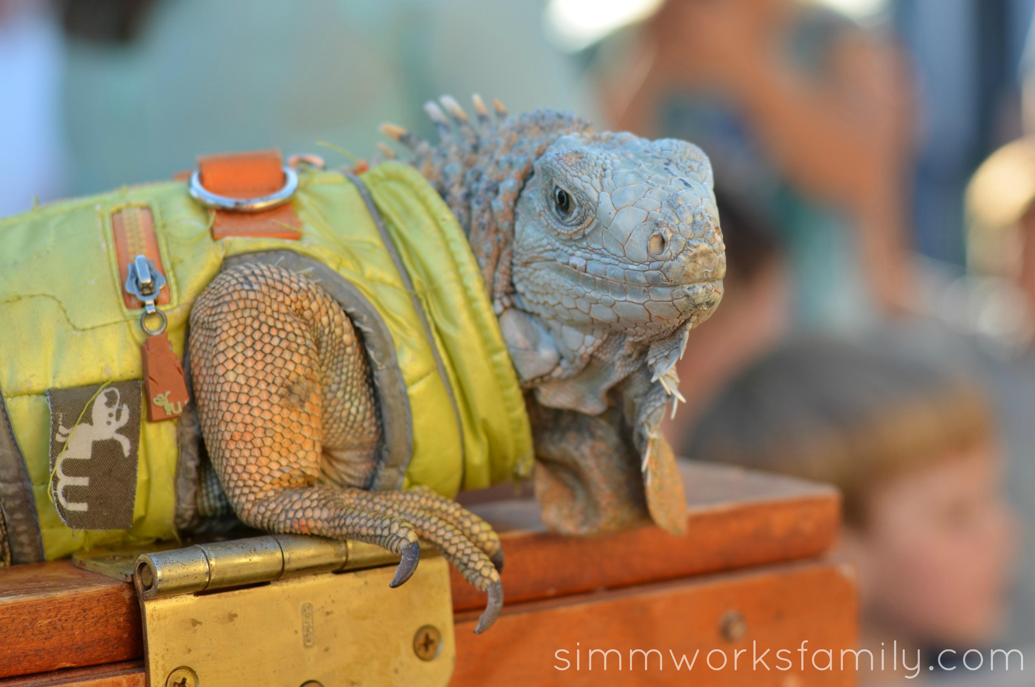 reptile birthday party iguana