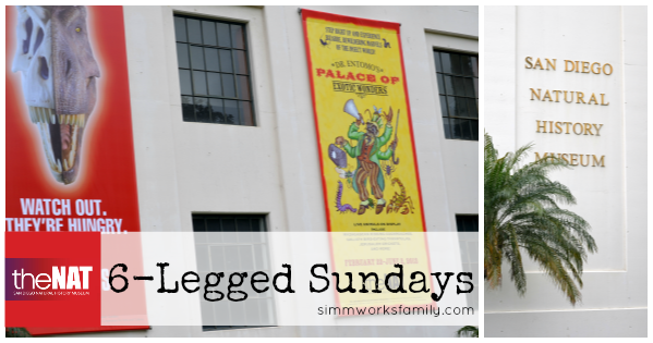 6 Legged Sundays Natural History Museum