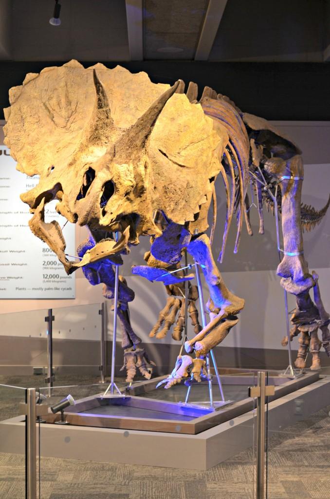 boston museum of science dinosaurs