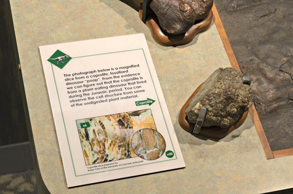 boston museum of science dinosaur poop