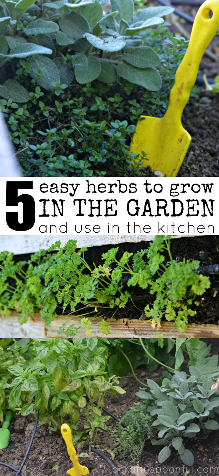 5 Easy Herbs To Grow In The Garden And Use In The Kitchen