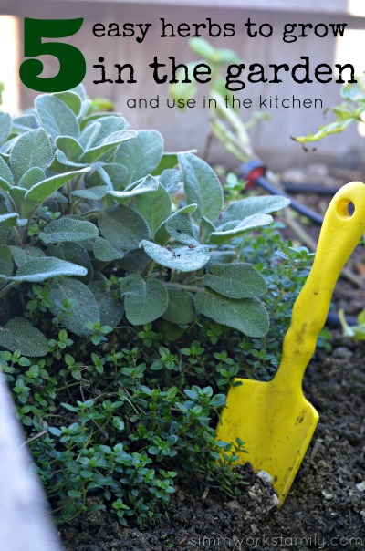 5 Easy Herbs to Grow In The Garden