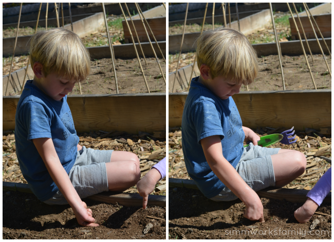 How to Grow Carrots with Kids measure and poke