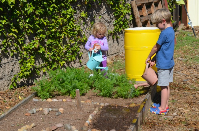 How to Grow Carrots with Kids water seeds