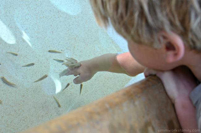 SeaWorld San Diego Explorers Reef cleaner fish