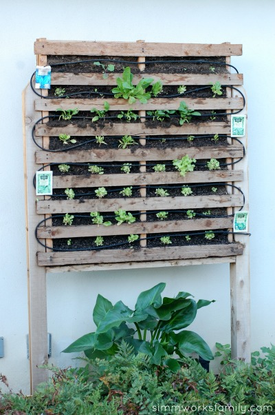 build a vertical garden using pallets - plant from seed