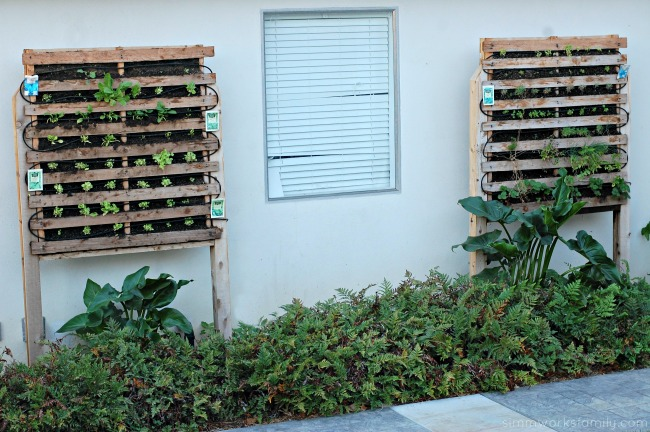 build a vertical garden using pallets - planted
