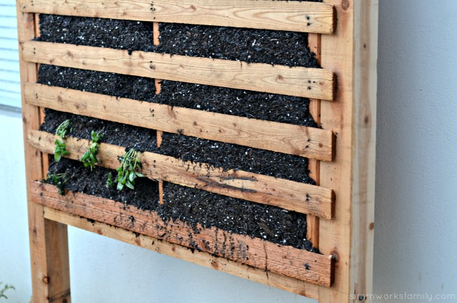 build a vertical garden using pallets - planting from starters