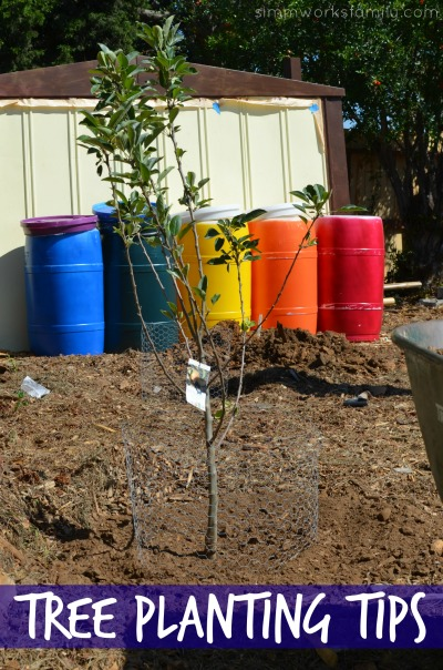 Tree Planting Tips Planning Your Garden