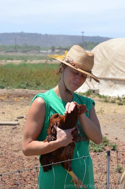 Suzie's Farm chickens