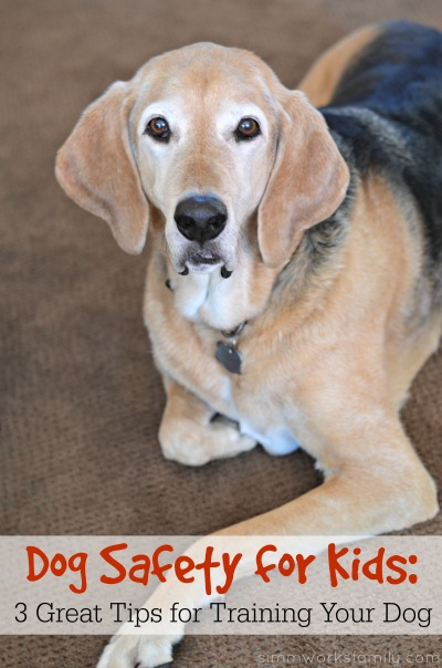 Dog Safety for Kids 3 Great Tips for Training Your Dog