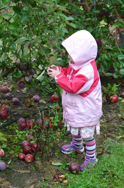 Picking Apples in Boston #SweetNLowStars