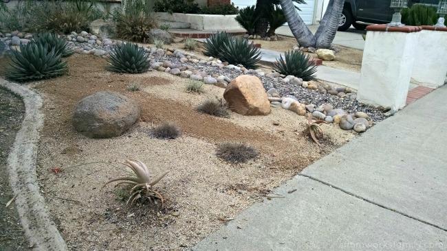 Adding Desert Plants to Your Garden xeriscaping