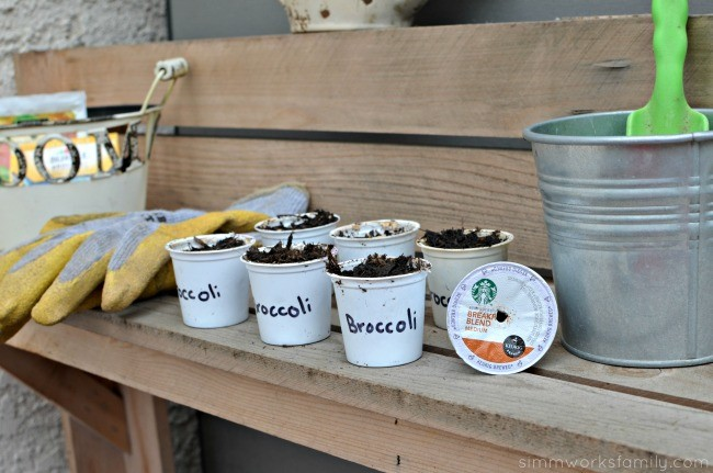 K-Cup Seed Starters - broccoli