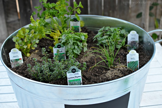 Upcycled Container Gardens - variety of herbs