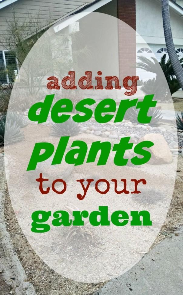Adding Desert Plants to Your Garden