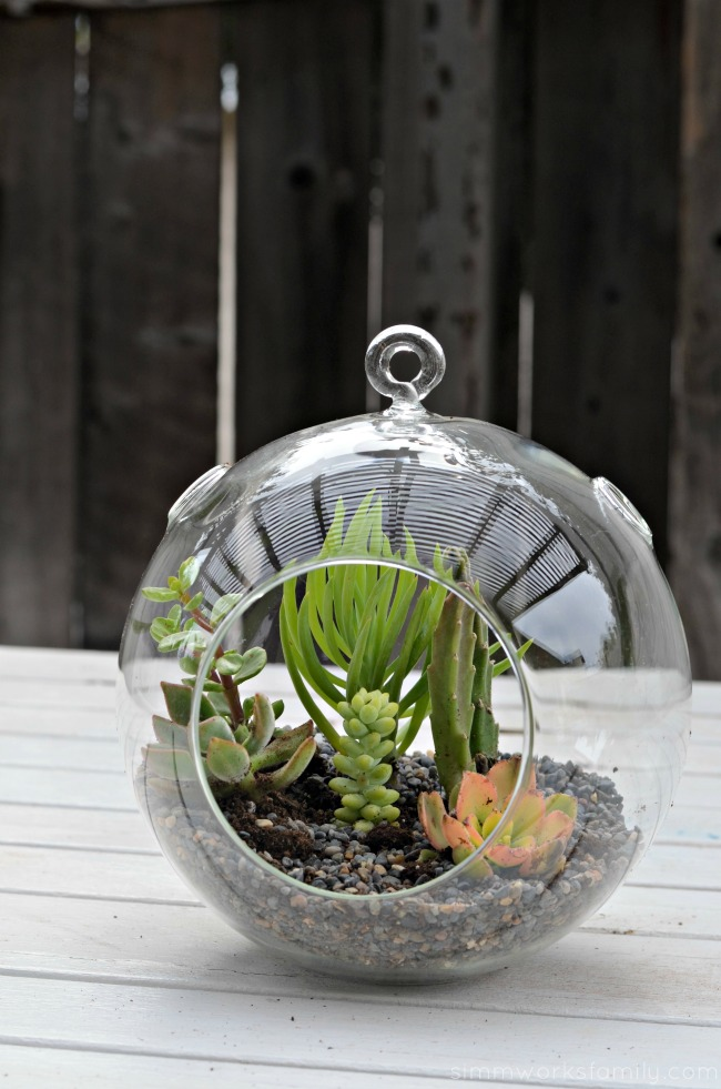How To Make A Simple Succulent Terrarium - an easy and quick gift idea
