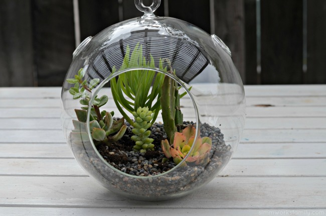 How To Make A Simple Succulent Terrarium - perfect for your desk or patio