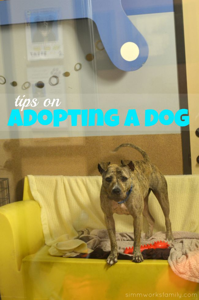 Clear The Shelters Tips On Adopting A Dog