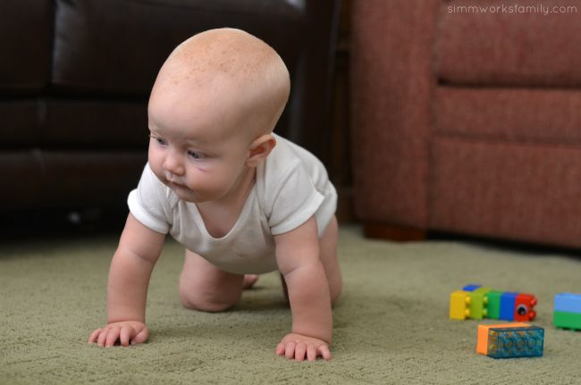 Updating Our Home How To Decide On Flooring - consider pets and children
