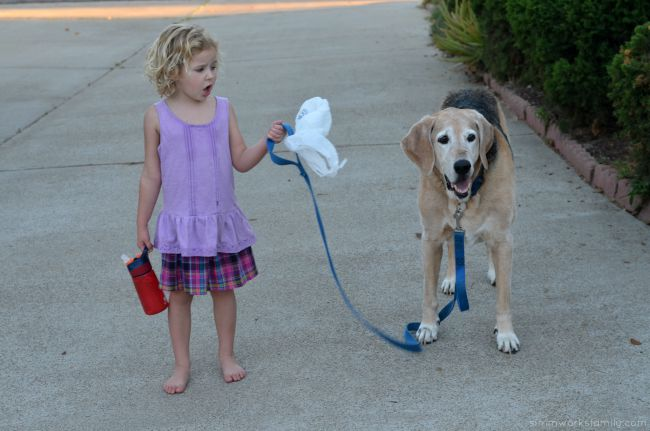 Top 10 Essentials When Traveling with Dogs - walking the dog