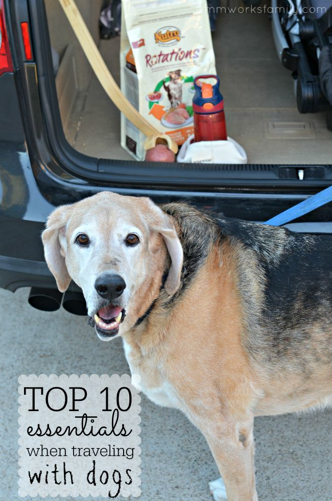 Top 10 Essentials When Traveling with Dogs