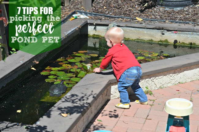 7 Tips for Picking The Perfect Pond Pet