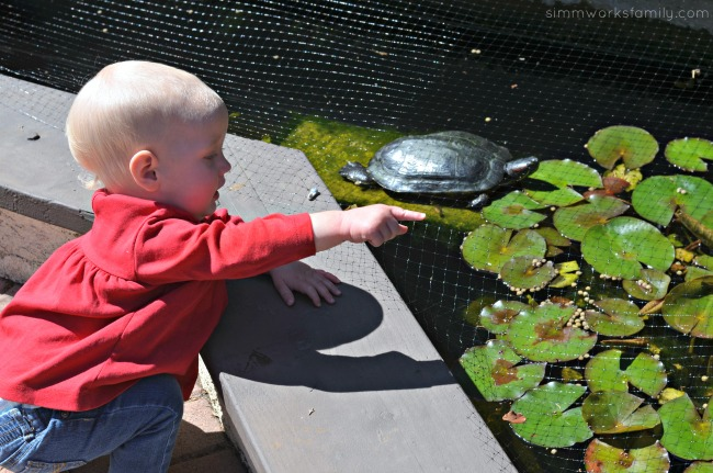 Picking the Perfect Pond Pet - consider kids in the decision