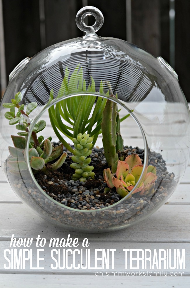 Make A Cardboard 3d Model Of Your Area Using Local: How To Make A Simple Succulent Terrarium
