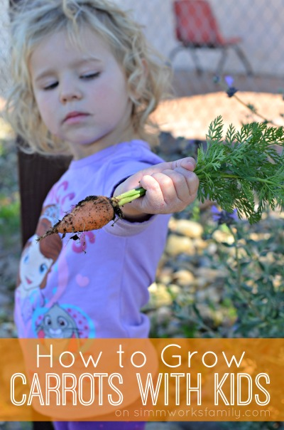How To Grow Carrots With Kids From Garden To Table